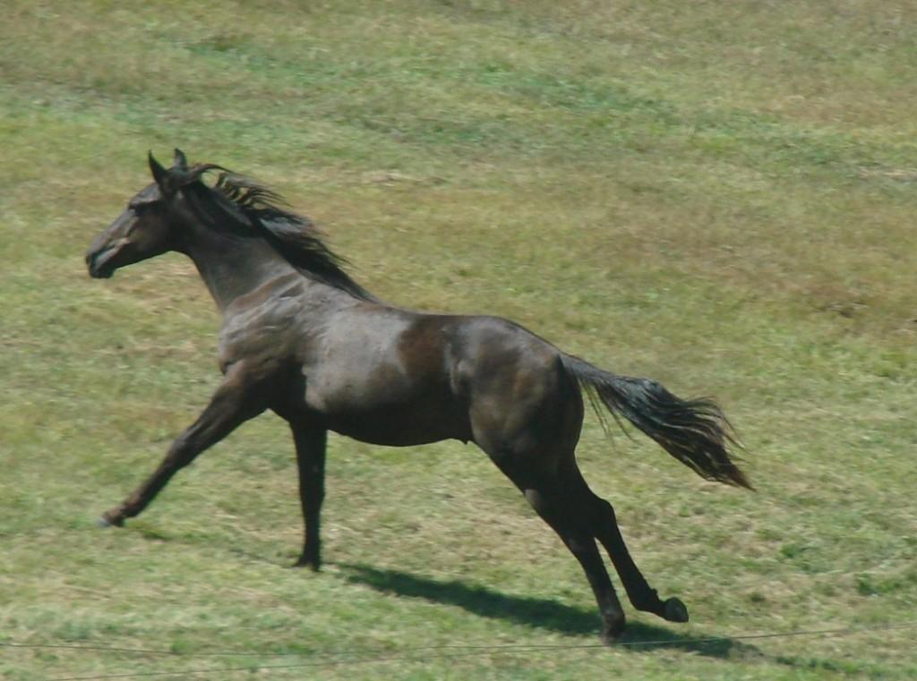 fasterhorse
